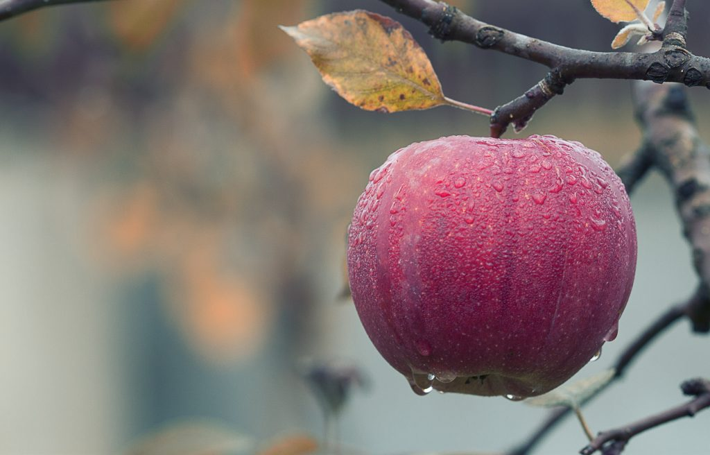 Ripe and Ready - Is your business ready for sale?